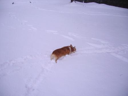 雪てん 201301261