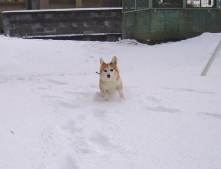 雪てん 201301265