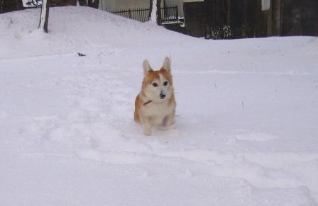 雪てん 201301266