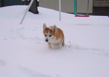 雪てん 201301273