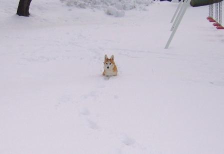 雪てん 201301276