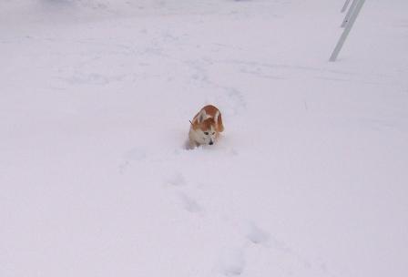 雪てん 201301277