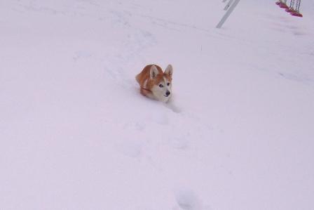 雪てん 201301278