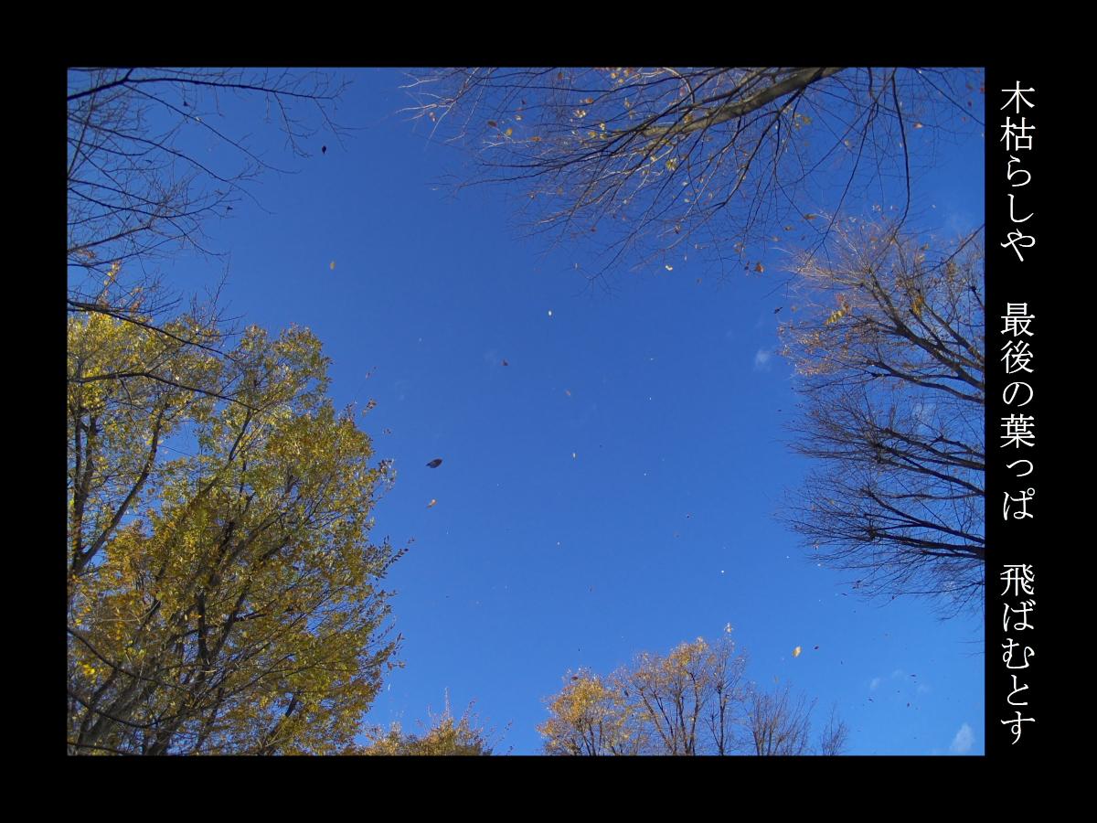 木枯らしや最後の葉っぱ飛ばむとす