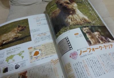 catalog2[1]