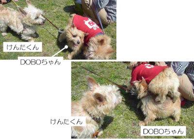 4 D vs M[1]