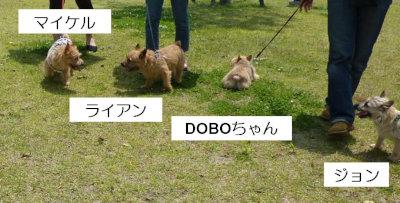 13 おにぎりDOBOちゃん[1]