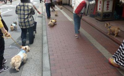 13 中華街[1]