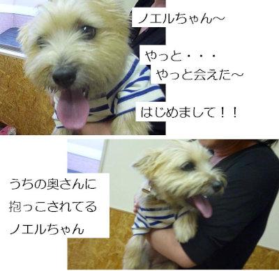 3 のえるちゃん[1]