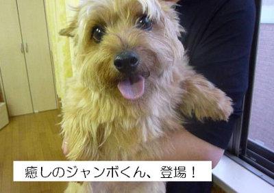 11 じゃんぼ[1]