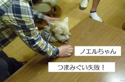5 のえるちゃん[1]