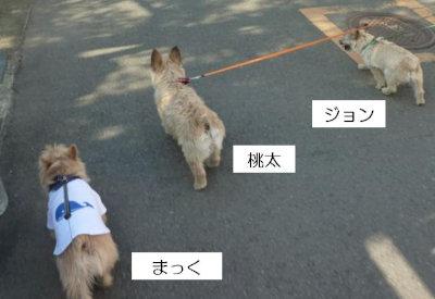 3 3ぴき[1]