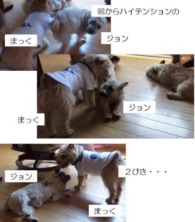 7 なかよし2ぴき[1]