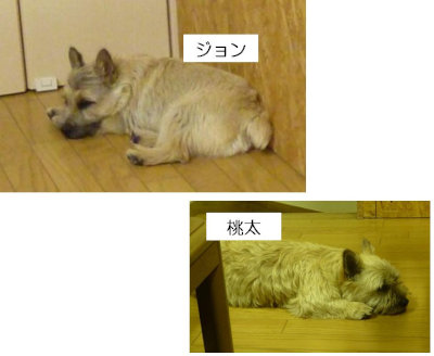 10 ジョン・桃太 お疲れ[1]