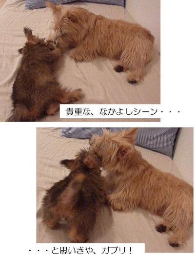 7 なかよし[1]