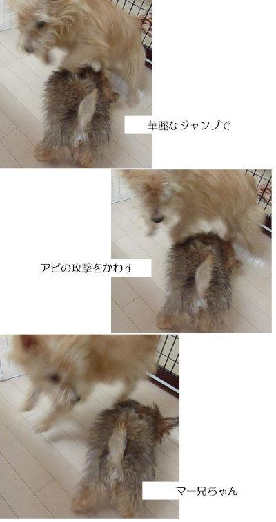 じゃんぷ[1]