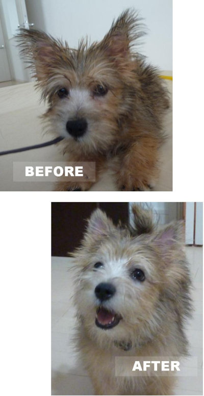 before after[1]
