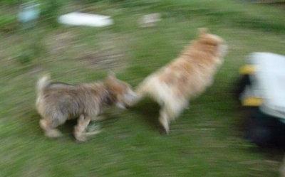 run[1]