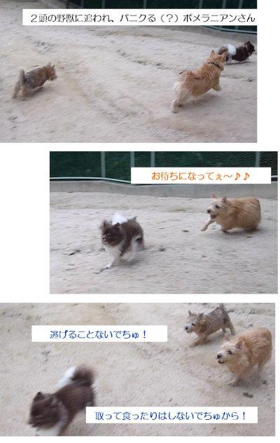 10 追う2頭[1]
