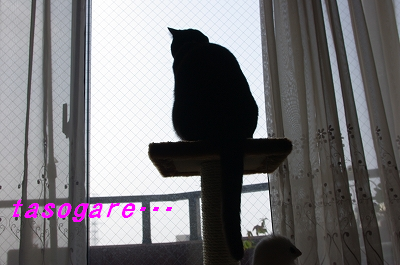 s-猫タワー2