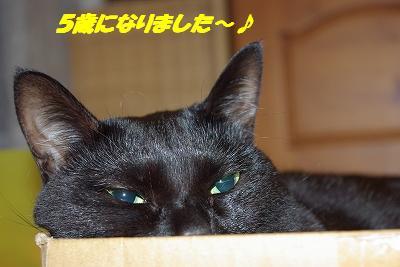 s-青い目セン