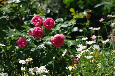 s-軽井沢の花3