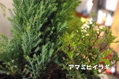 s-冬の木
