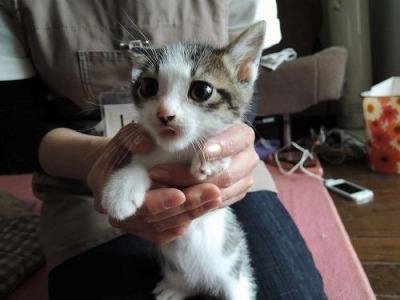 cat153レン元(かおしん)