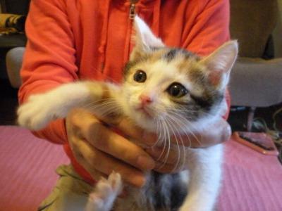 cat155ヒメ元(ぽんよー)