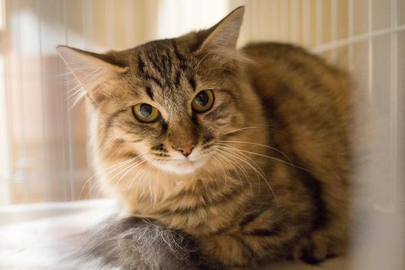 cat221-7.jpg