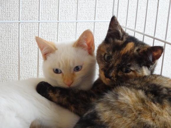 cat247-3_20130402100133.jpg
