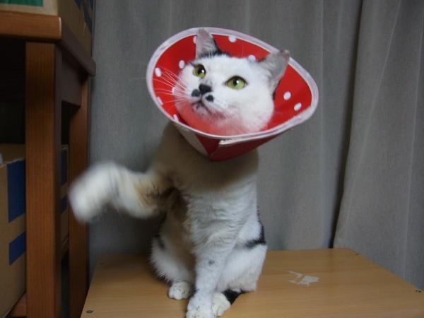 写真招き猫
