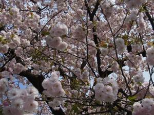 芝桜その他4縮小