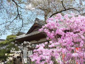 芝桜その他3縮小