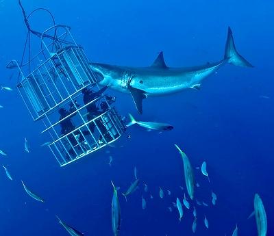 shark-cage_1593850i.jpg