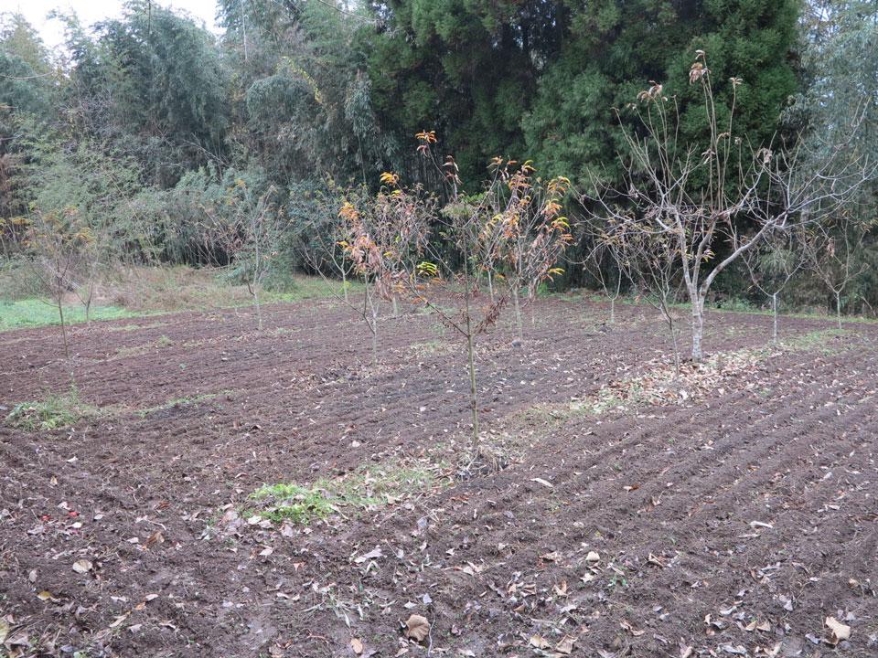 下の畑2013_2