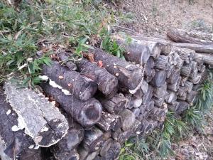 131228原木