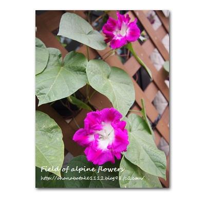 11_20121011105141.jpg