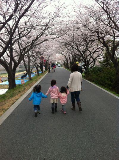 お花見2013
