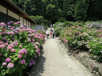 矢田寺 (8)