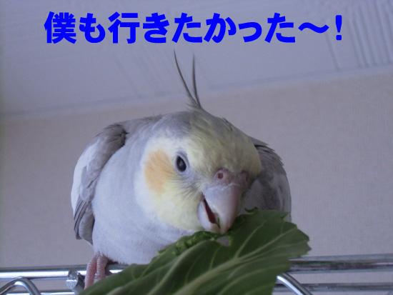 風は無理だよ~