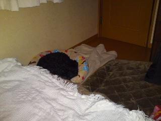 クロさん寝てる1