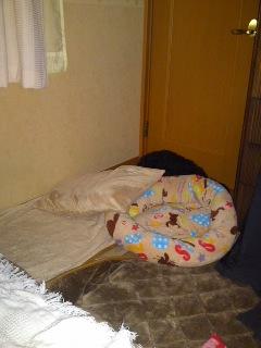 クロさん隠れて寝る