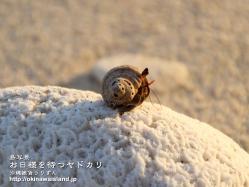 沖縄,壁紙,座間味,阿嘉