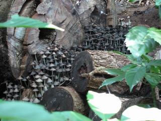 熱田神宮のキノコ