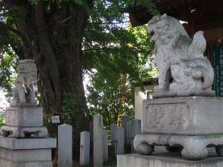 中山手神明社の狛犬