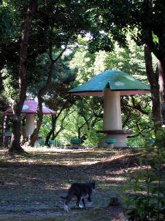 日高公園のキノコ