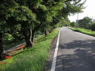 菅生川堤防道路