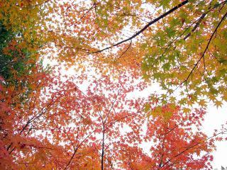 校庭の紅葉