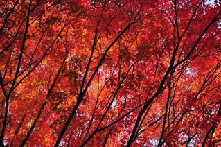 岡崎 東公園 紅葉